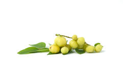 Small star gooseberry on the white background Royalty Free Stock Photo