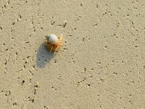 Small Step - A Tiny Crustacean with Seashell Walking across Sandy Beach. This is a photograph of a tiny crustacean along with its seashell, walking across sandy royalty free stock photos