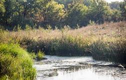 A still river. The small still hush river Royalty Free Stock Photos