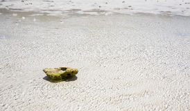 Small stone and sea Stock Images