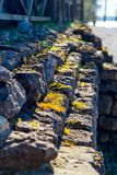 Small stone steps with grass on them. Close-up. Small stone steps. Yellow grass on stone steps. Steps on a sunny day. Vertical image. Close-up royalty free stock photography