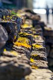 Small stone steps with grass on them. Close-up. Small stone steps. Yellow grass on stone steps. Steps on a sunny day. Vertical image. Close-up stock photos
