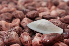 Small stones on the beach with sea shells Royalty Free Stock Image