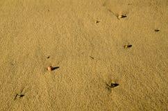 Small stones on a sandy beach in Palma de Mallorca, Spain. Royalty Free Stock Photos