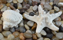 Small stones and starfish and shell Stock Images