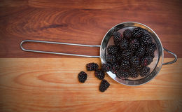 Small Strainer with Blackberries Stock Image