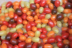 Small strange tomatoes. red, burgundy, yellow and orange. Small colored strange bizzare tomatoes. red, burgundy, yellow and orange royalty free stock image