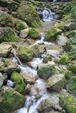 Small stream. Running over moss covered stones Royalty Free Stock Photo