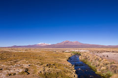 Small stream in the Andes. Park Sajama, Bolivia. High Andean tundra landscape in the mountains of the Andes. The weather Andean Highlands Puna grassland stock image