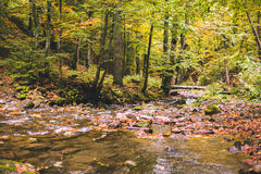 Small stream in autumn beech forest. Stock Photos