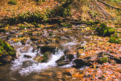 Small stream in autumn beech forest. Stock Photo