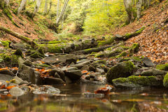 Small stream in autumn beech forest. Royalty Free Stock Photography