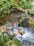Small stream Royalty Free Stock Photos
