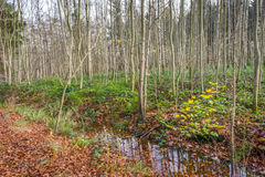 Small stream in an autumnal forest Stock Photography