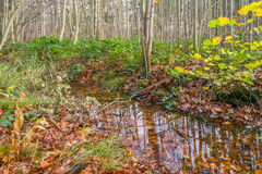 Small stream in an autumnal forest Stock Photo