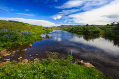 Small stream. Beautiful small stream flowing throug meadow near the Raykjavik, Iceland Royalty Free Stock Photos