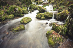 Small stream in black forest Stock Photo