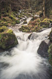 Small stream in black forest Stock Photography