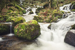Small stream in black forest Royalty Free Stock Photos