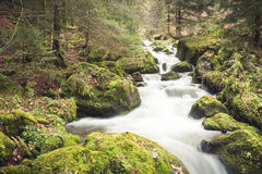 Small stream in black forest Royalty Free Stock Image