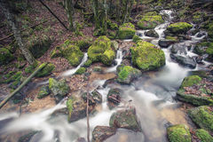 Small stream in Black Forest Royalty Free Stock Photo