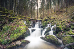 Small stream in Black Forest Stock Images