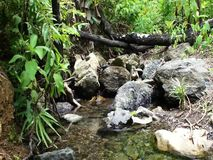 A small stream with clear water in the tropical jungle. Palawan Island stock footage