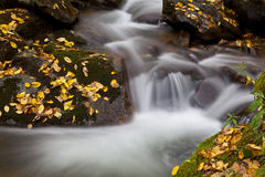 Small Stream of Creek Water Royalty Free Stock Photo
