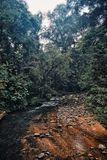 Small stream crossing the rainforest of sabah borneo malaysia royalty free stock images