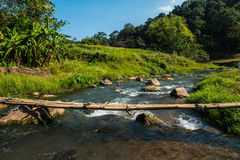 Small stream that curves along the forest. Royalty Free Stock Images