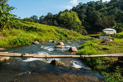 Small stream that curves along the forest. Stock Photo