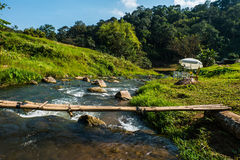 Small stream that curves along the forest. Stock Image
