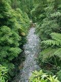Small stream in dense vegetation Royalty Free Stock Image