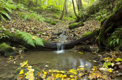 Small Stream Falling Over A Tree Trunk. Stock Photography