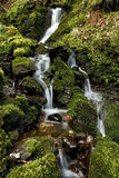 Small stream of falling water over moss and rocks. By the River Neath, near Pontneddfechan, Vale of Neath, South Wales Royalty Free Stock Image