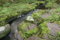 Small stream flow Royalty Free Stock Photos