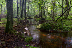 Small stream flowing in forest Royalty Free Stock Image