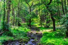 A small stream flowing through an English forest in Summer. royalty free stock image