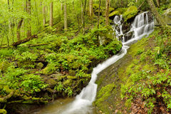 Small stream flowing through forest. Stock Image