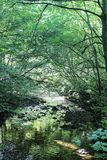 Small stream flowing through green leafy glade Royalty Free Stock Photos