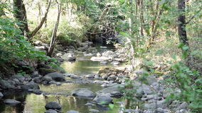 Small Stream Flowing Over Rocks Through Trees stock footage