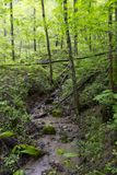 Small stream flowing through spring forest stock photo