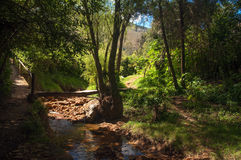 A Small Stream in a Forest. A small stream and path running through a forest Royalty Free Stock Photos