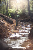 Small stream in forest Stock Image