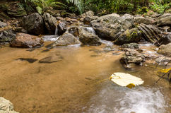 Small stream in the forest. Chaloem Rattanakosin National Park, Kanchanaburi Royalty Free Stock Photography