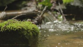 Small stream in a forest stock footage
