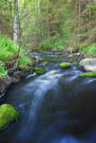 Small stream in forest Stock Photo
