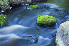 Small stream in forest Stock Photography
