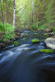 Small stream in forest Royalty Free Stock Photo