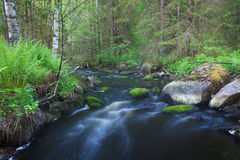 Small stream in forest Stock Photos
